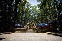 Monkey forest in Bali