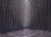 Pathway in dark forest