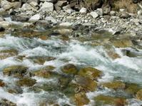creek flowing over stones