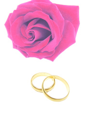 pink rose and wedding rings