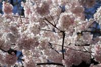 Flowers Entangled