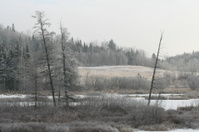 Winter Scenic