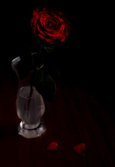 Single red rose in vase upon wooden table
