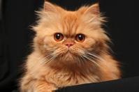 Artful cat