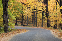 Horizontal Autumn Canopied Road