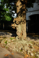 Knobbly tree bark