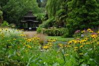 Oriental garden, U.K.