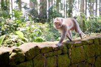 monkey in monkey's forest