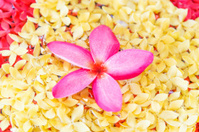 orchid pink flower spa