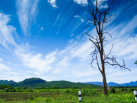 old dry tree on roadside with blue sky
