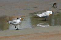 seabirds on Daytona Beach