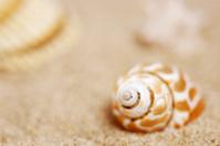 Macro Shot of Snail