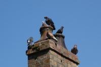 birds on the chimney stack