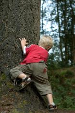 Little boy behind a tree