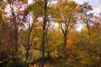 Autumn Woods Scene