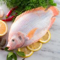 Freshness reddens the Nile Tilapia fish (Oreochromis niloticus)