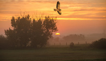 Early Hunter at Sunrise