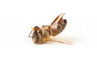 Upside down honey bee