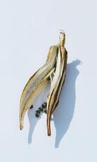 Dried Okra Pod