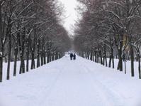 avenue at winter