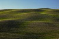 Ondulate green landscapein tuscany