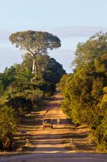 Mozambique, Nampula Province, rural road.
