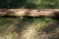 Dead tree trunk in a gress field