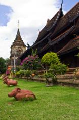 rat in Wat Lokmolee , chiangmai Thailand