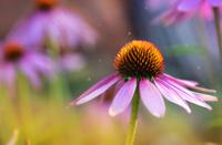 Violet flower close up