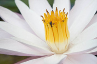 bug swarm in pollen