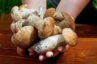 Hands holding Mushrooms