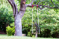 Swing on a tree