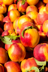 Peaches (Nectarine)