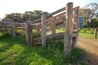 Wooden sheep loading ramp