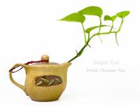 Fresh Chinese tea in white back ground