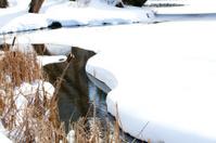 Stream in winter park