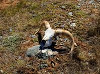 Skull in steppe