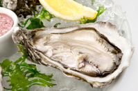Pacific Oyster Crassostrea gigas