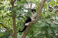 Black cat on the tree in garden.