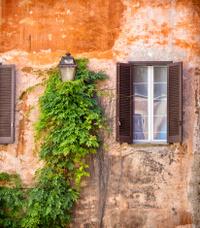 Idyllic facade with vine, Rome Italy