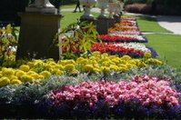 beautiful flower garden