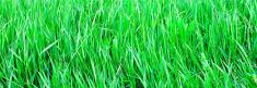 panoramic view to vivid green grass
