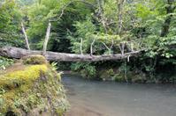 rope bridge over the river