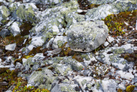 Rocks covered with moss and lichen