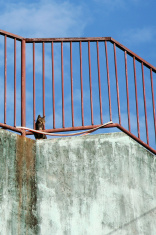 On Roof, Behind Bars