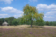 Sheepfold in Lueneburg Heath,Lower Saxony,Germany