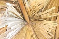 Sugar palm leaves