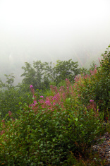 Flowering Summit