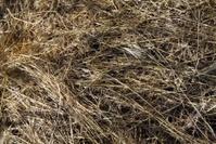 dry grass hay