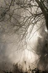 Altrhein , mystic foggy forest